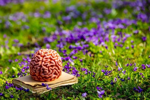 Ludzki mózg na książce na zielonej łące z fioletowymi kwiatami.