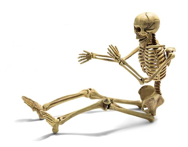 Ludzki szkielet na białym tle