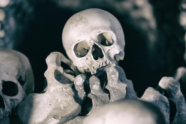 Ludzkie kości i czaszki jako tło.
