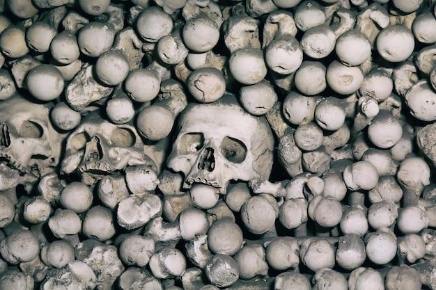 Ludzkie kości i czaszki