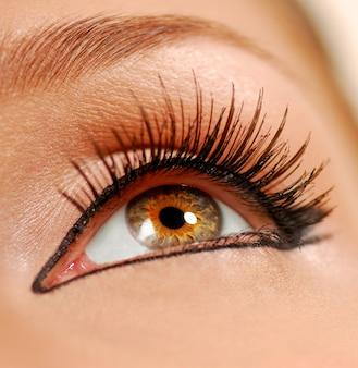 Ludzkie oko kobiece. sztuczne rzęsy. liniowiec.