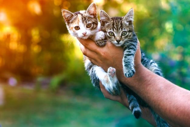 Ludzkie ręce trzyma całkiem małe kocięta