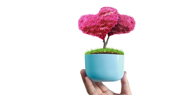 Ludzkie ręce trzymając kiełkować młoda roślina. środowisko dzień ziemi w rękach drzew rosnących sadzonek