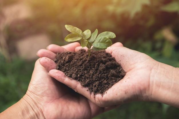 Ludzkie ręki trzyma zielonego małej rośliny życia pojęcie