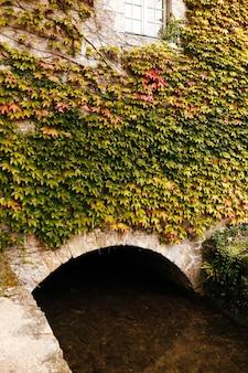 Łuk budowlany pokryty bluszczem. pod łukiem przepływa strumień lub rzeka.