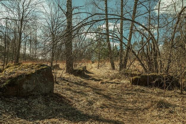 Łuk drzewa w poprzek ścieżki w kamienistym lesie