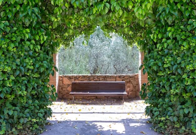 Łuk stworzony przez bluszcz hedera helix magnoliophyta magnoliopsida, za którym znajduje się drewniana ławka bez nikogo dająca romantyczną i spokojną atmosferę