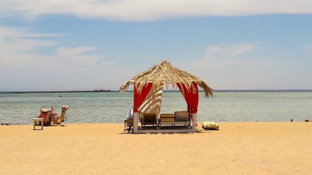 Luksusowe namioty ze słomy w arabskim stylu nad morzem czerwonym i wielbłądem w egipskim kurorcie sharm el sheikh. koncepcja letniej plaży, projekt dla relaksu i spokoju.