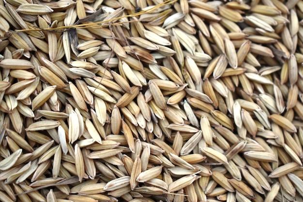 Łuska ryżowa suszona na skraju pól ryżowych