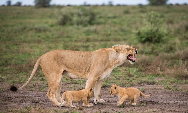 Lwica z młodym w przyrodzie