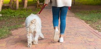 Młodej dziewczyny odprowadzenie z jej psem w parku