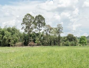 Mała chata w polu