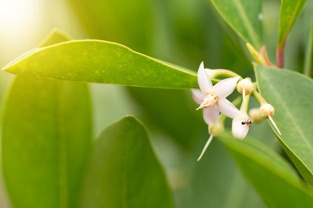Ma? y ró? owy tropikalny kwiat na zielone t? o gradientu