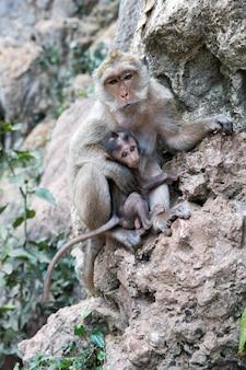 Macierzysta małpa z dziecko małpą