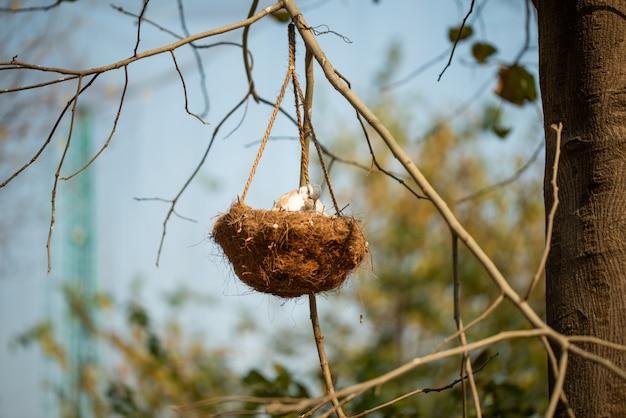 Macierzysty ptak karmi jej dziecka w gniazdowym obwieszeniu na gałąź