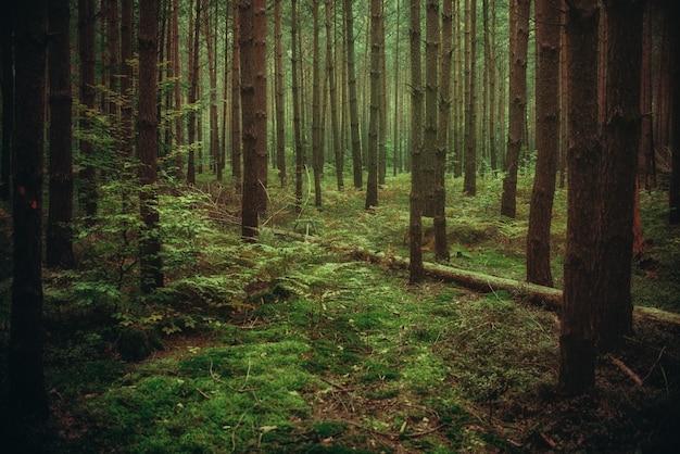 Magiczna atmosfera lasu, naturalne tło
