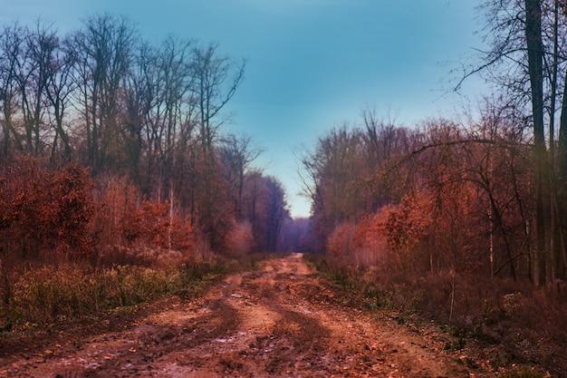 Magiczna bajka w marzycielskim mglistym lesie. tajemnicze surrealistyczne światło w mglistym lesie. las jesienią. magiczna jesień leśna droga.