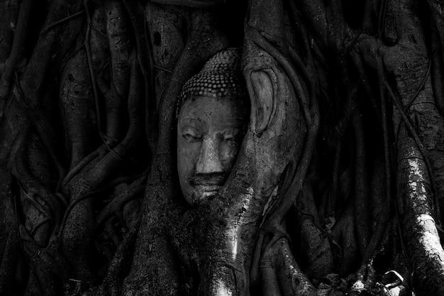"""Magiczna głowa buddy z piaskowca w pniu lub korzeniu drzewa w """"wat mahathat""""."""