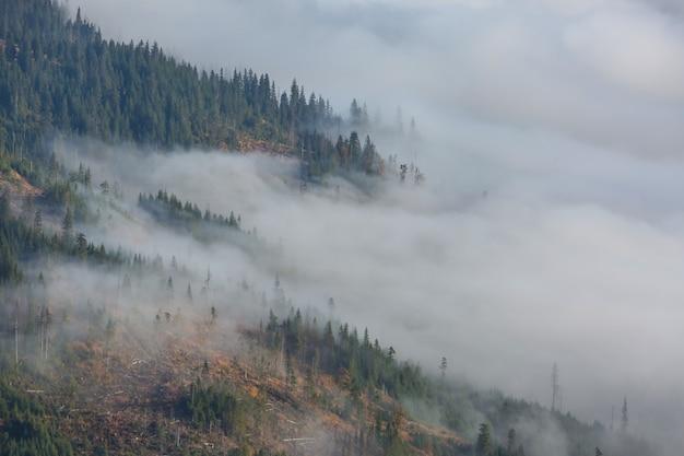 Magiczna mgła w lesie