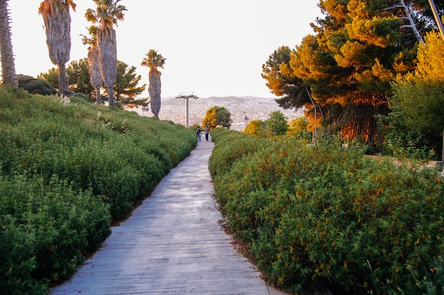 Magiczna przyroda, park, mnóstwo zielonych roślin i drzew w barcelonie