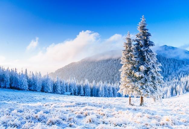 Magiczne drzewo pokryte śniegiem zimy