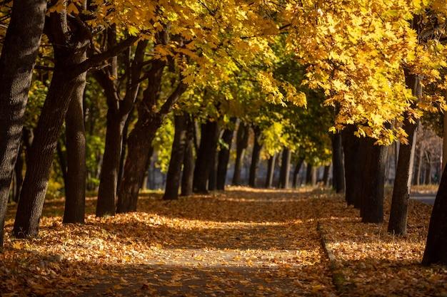 Magiczne światło na końcu chodnika w jesiennym parku.