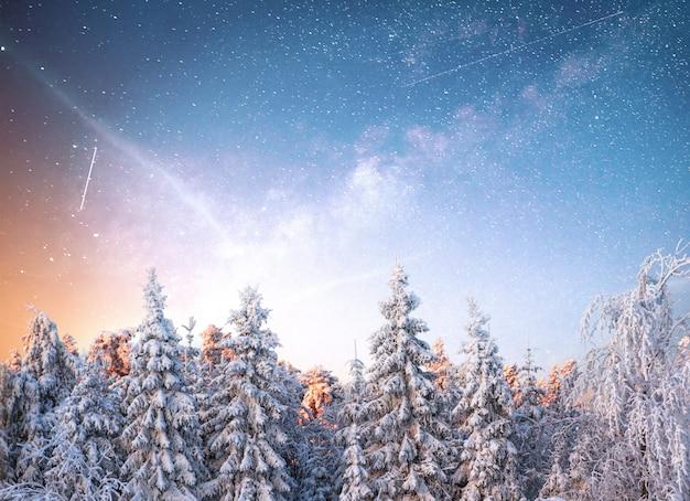 Magiczne zimowe drzewo pokryte śniegiem. zimowy krajobraz.