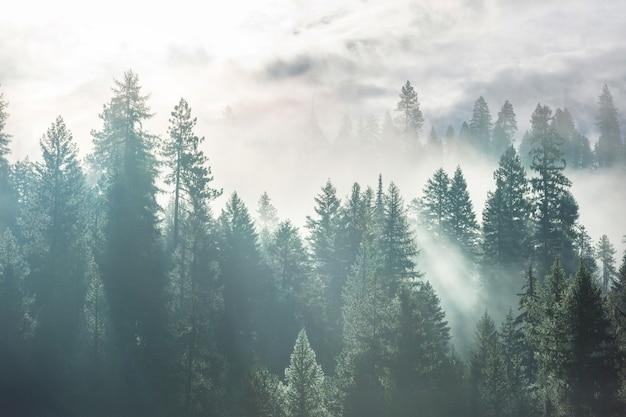 Magiczny Mglisty Las. Piękne Naturalne Krajobrazy. Premium Zdjęcia