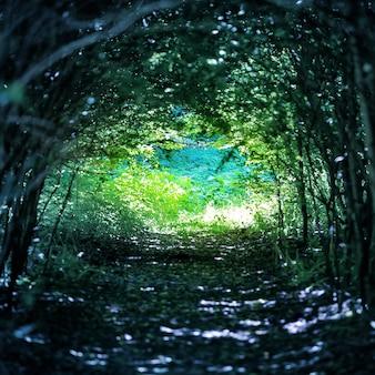 Magiczny niebieski las ze ścieżką do światła przez ciemny tunel drzew
