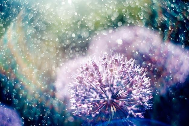 Magiczny obraz piękne niezwykłe fioletowe kwiaty w promieniach tęczy w sprayu i krople wody.