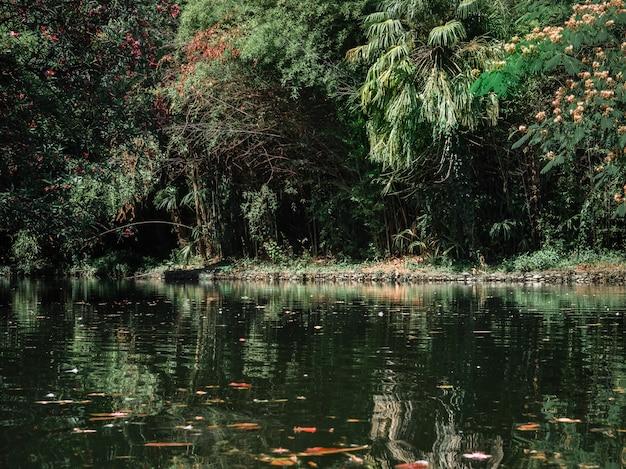 Magiczny staw ogrodowy z kwitnącymi irysami bagiennymi na brzegu