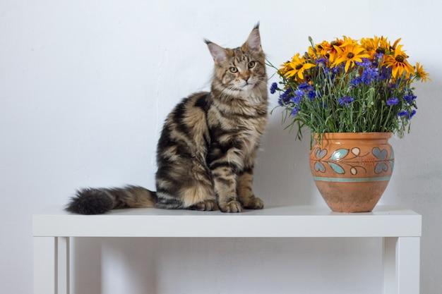 Maine coon kociak siedzi na białej konsoli obok wazy z pomarańczowymi i niebieskimi kwiatami na białej ścianie