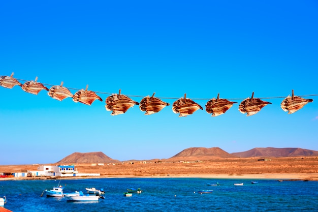 Majanicho wysuszona papuga ryba vieja w fuerteventura