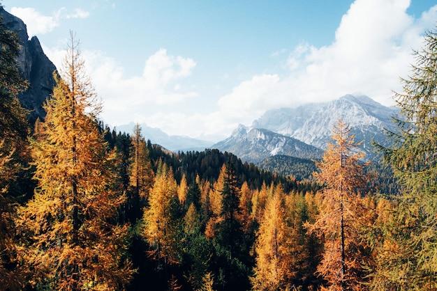 Majestatyczne góry z pięknymi lasami jesienią w słoneczny dzień. piękny krajobraz