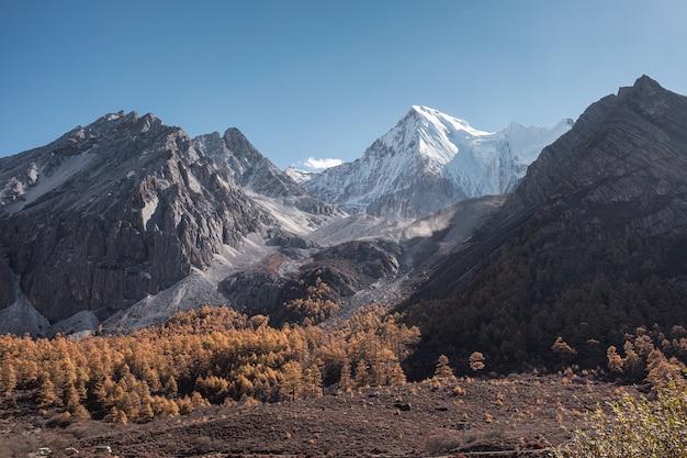 Majestatyczne pasmo górskie lśniące sosnowym lasem w godzinach porannych. rezerwat przyrody yading, chiny