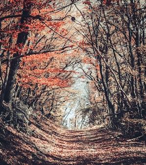 Majestatyczny kolorowy las