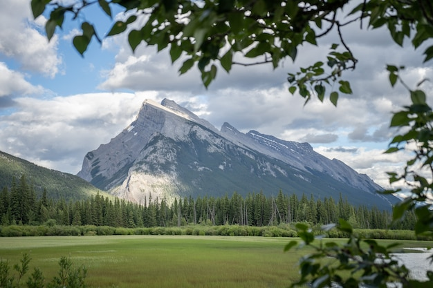 Majestatyczny szczyt górski otoczony gałęziami park narodowy banff kanada
