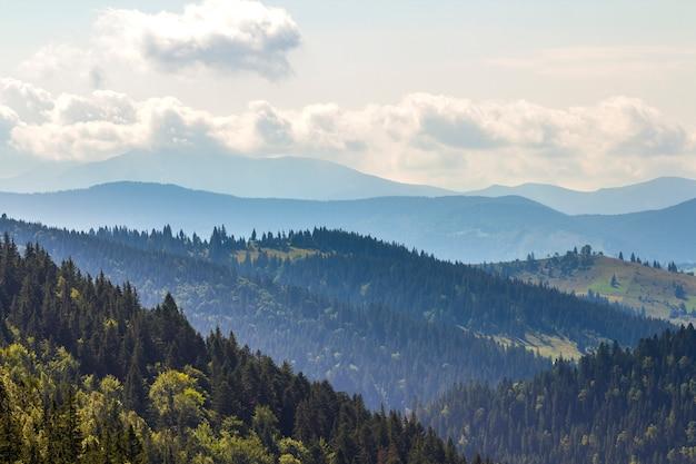 Majestatyczny widok na wspaniałe karpaty, gęsto pokryte zielonym lasem, ukraina. mgliste grzbiety górskie w oddali, miękkie słońce, jasne niebo z białymi chmurami.