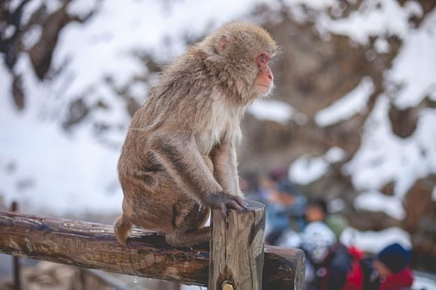 Makak małpa stojąc na drewnianym płocie
