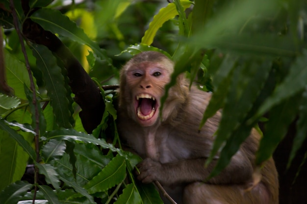 Makak rezus siedzący pod drzewem w żartobliwym nastroju