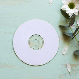 Makieta cd obok kwiatu