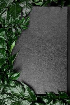 Makieta czarnego pudełka na ciemnym tle z zielonymi liśćmi po bokach, układ płaski, miejsce na tekst, widok z góry,