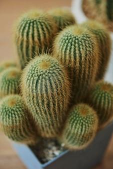 Makieta kaktusa z morskim piaskiem w doniczce