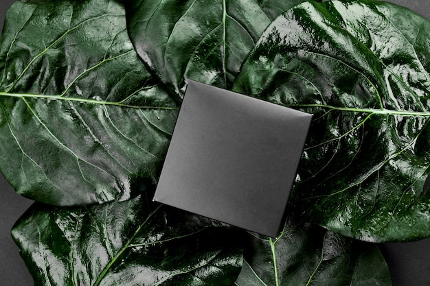 Makieta na czarne pudełko upominkowe ciemne tło z zielonymi liśćmi po bokach, kreatywny układ, układ płaski, koncepcja natury, miejsce na tekst, widok z góry