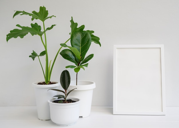 Makieta ramki na zdjęcia i rośliny domowe w nowoczesnym stylowym pojemniku na białym drewnianym stole w białym wnętrzu pokoju, naturalne oczyszczanie powietrza za pomocą selloum philodendron, roślin gumy, ficus lyrata
