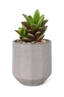 Makieta soczystych roślin w małej szarej doniczce