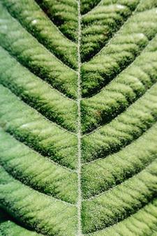 Makieta wzoru w liściach dużej rośliny
