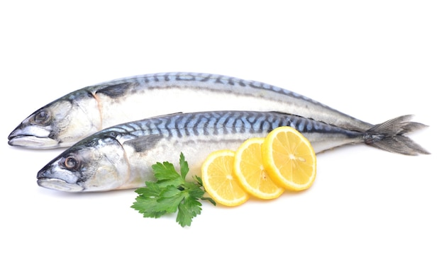 Makrela rybna