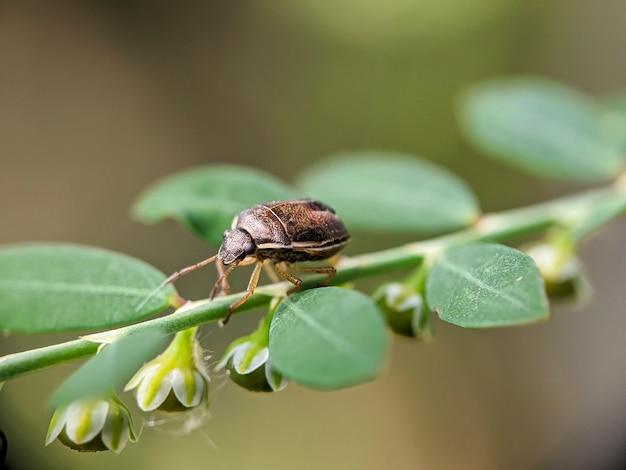 Makro brązowe owady na zielonych liściach