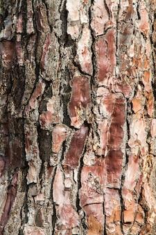 Makro brązowej kory drzewa